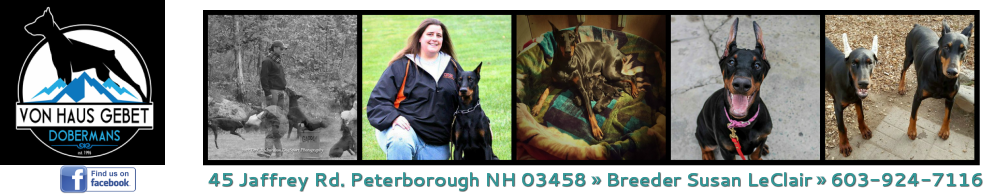 Von Haus Gebet Dobermans - Peterborough NH